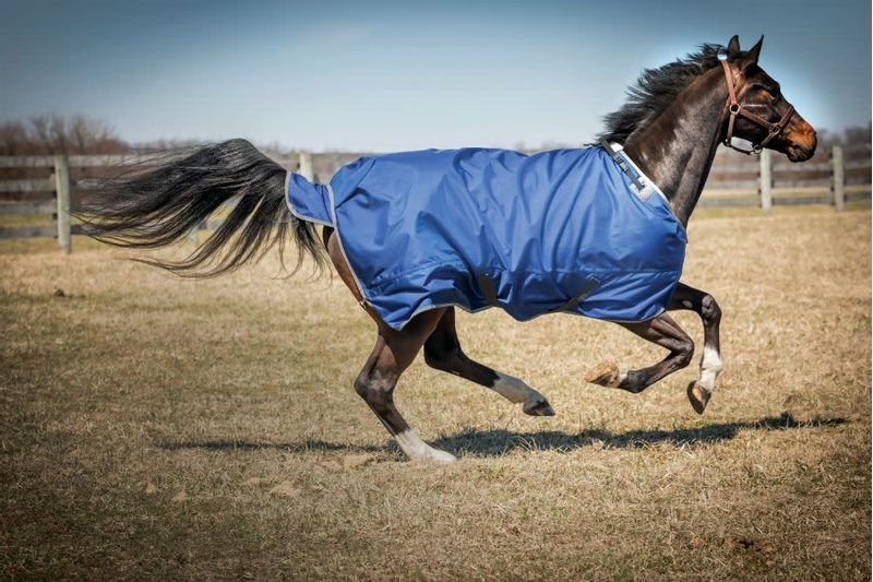 OPEN-BOX--2520D-Super-Medium-Weight-Turnout-Blanket---Cobalt-80