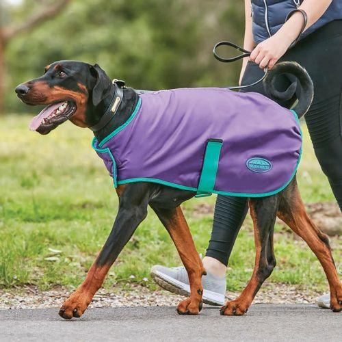 Weatherbeeta Comfitec Windbreaker Free Dog Coat - Purple/Green